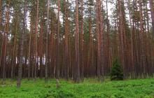 Ziemia coraz bardziej zielona? Wszystko przez wzrost stężenia CO2