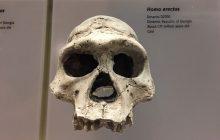 Polski badacz dokonał rewolucji? Odkrył najstarsze znane ślady przodków człowieka i skomplikował znaną dotąd historię